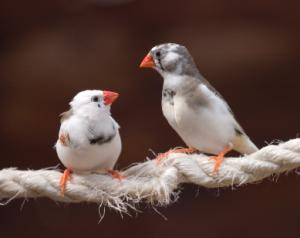2 finches